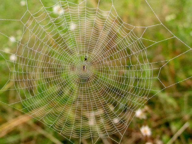 Foto tomada de http://www.ojocientifico.com/