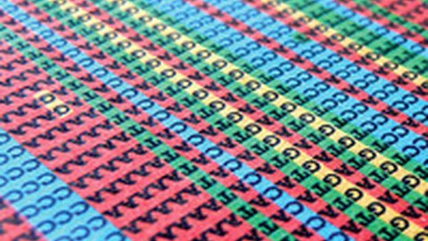 El ADN ya se puede editar letra a letra. (Science/Shaury Nash)