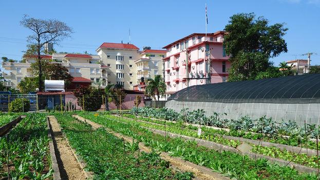 Agricultura urbana en La Habana (Flickr)