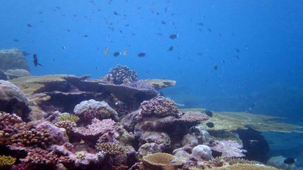Corales en el océano Índico. (Mark Spalding)