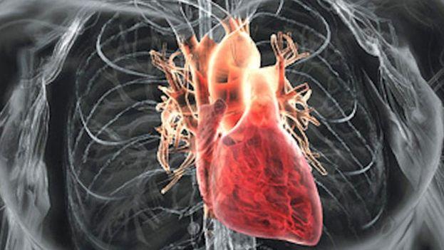 Corazón humano. (CC)