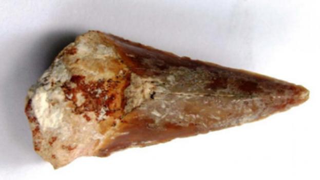 Fósil de uno de los dientes de escualos prehistóricos hallados en el yacimiento. (Julio Martínez Molina/Granma)
