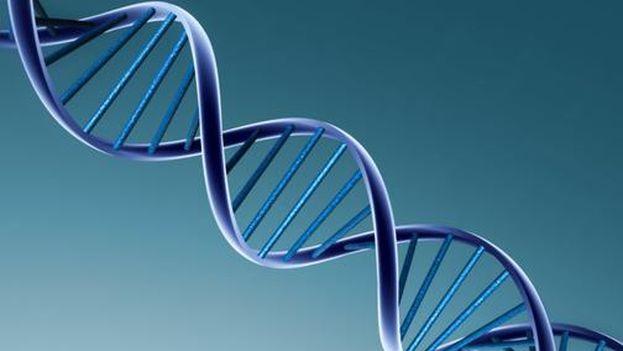 Google Genomics, almacenará el mapa del ADN completo de miles de personas a través de su sistema en la nube. (Google)