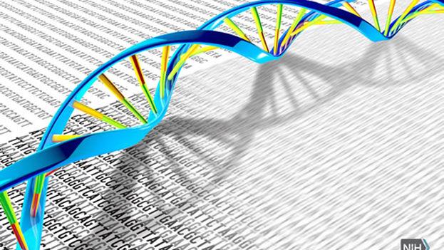 Gracias a las técnicas de secuenciación de ARN, conocidas como RNA-Seq, estamos más cerca de saber cómo puede llegarse a formar un animal o un ser humano. (NIH)