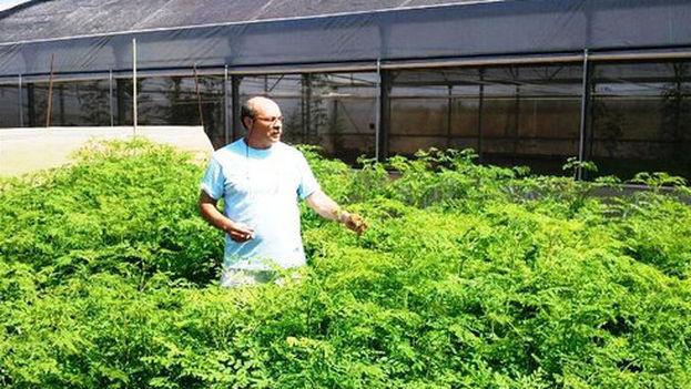 José Manuel Vecilla en sus campos de moringa canarios (Sinc)