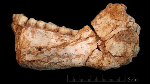 Mandíbula casi completa de un homo sapiens adulto descubierta en el complejo arqueológico de Jebel Irhoud. (phys.org)