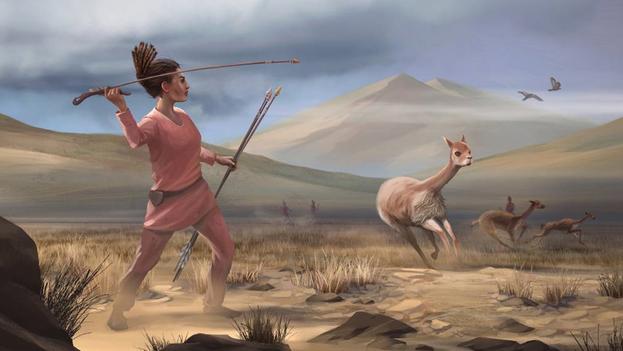 Reconstrucción artística de la caza de vicuñas en Wilamaya Patjxa (Perú). (Matthew Verdolivo/Universidad de California en Davis)