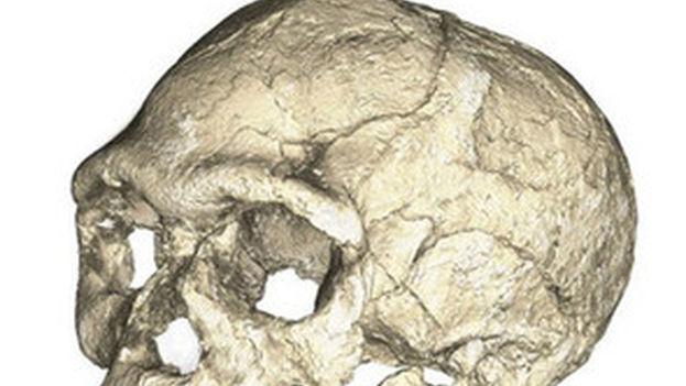 Reconstrucciones del cráneo de los primeros fósiles de Homo sapiens descubiertos en el yacimiento de Jebel Irhoud, Marruecos. (Philipp Gunz, MPI EVA Leipzig)