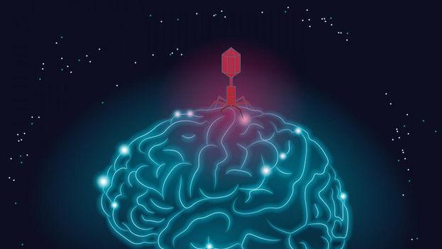 Los dos virus del herpes (HHV-6A y HHV-7) se detectaron en mayor abundancia en cerebros con alzhéimer y su actividad parece estar relacionada con ciertas características de la enfermedad. (Graphic by Shireen Dooling para el Biodesign Institute en ASU)