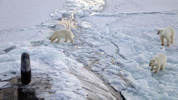 Tres osos polares se acercan a la proa del submarino USS Honolulu en el Polo Norte. (Foto Wikipedia)