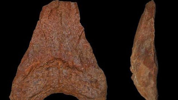 El descubrimiento del fósil se realizó a cuatro metros de profundidad, mientras el joven cienfueguero Yuri Alonso cavaba un pozo brocal. (biodiversidad virtual)