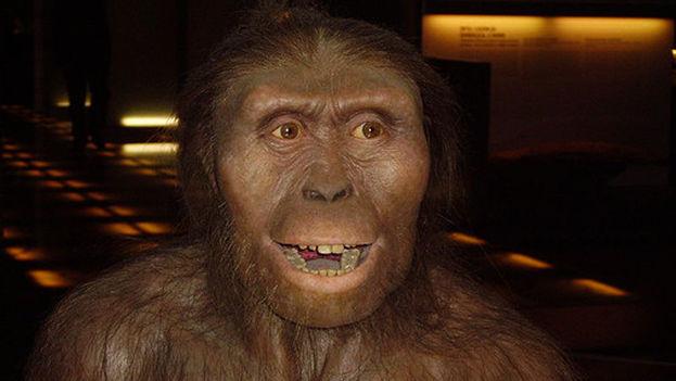 Las roturas del esqueleto fósil de Lucy evidencian que se cayó de más de 12 metros, lo que le provocó rápidamente la muerte. (Wikipedia)