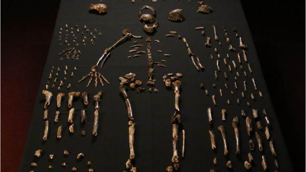 Los fósiles analizados en el estudio. (eLIFE)