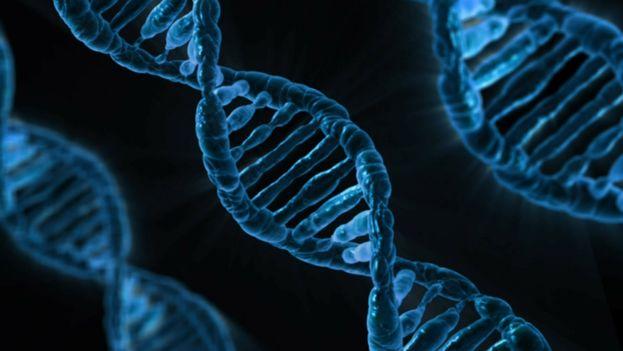 Una secuencia de ADN. (CC)