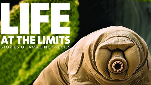 La vida al límite (CC)
