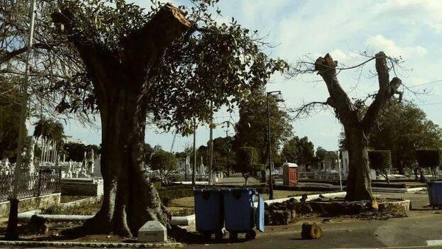Árboles podados en el Cementerio de Colón de La Habana. (Facebook/Juan Carlos Sáenz de Calahorra)