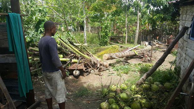 Árboles derribados por la tormenta que tuvo lugar en Camagüey el pasado 14 de junio. (14ymedio)