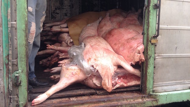 Cerdos. (14ymedio)