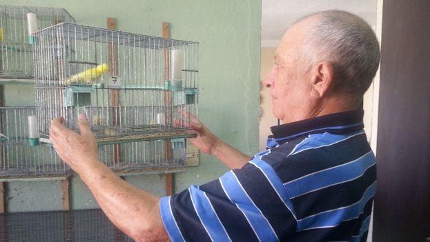 Cría de pájaros. (14ymedio)