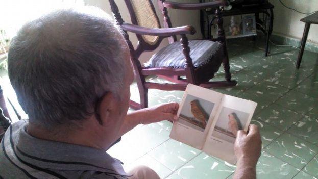 Con paciencia, Luis Morales Torres ahorró suficiente dinero para comprar canarios que sirvieron como base genética a varias generaciones de hermosos ejemplares. (14ymedio)