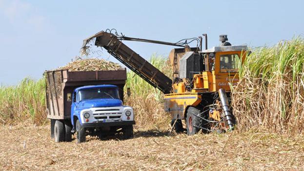 En Cuba la cosecha se extiende de noviembre a mayo. (La Demajagua)