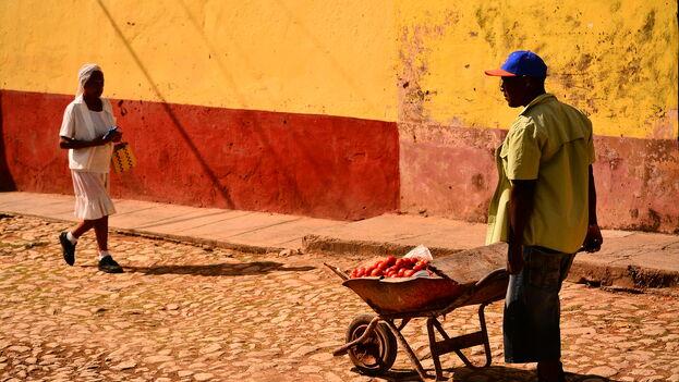 La producción de tomate en Cuba ha caído estrepitosamente en 2019, especialmente por falta de fertilizantes. (V. C. Nisida)