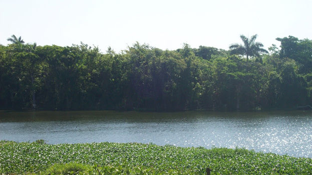 El Damují, que desemboca en la Bahía de Cienfuegos, es un sitio ideal para la propagación del mosquito 'anopheles'. (collruiz)