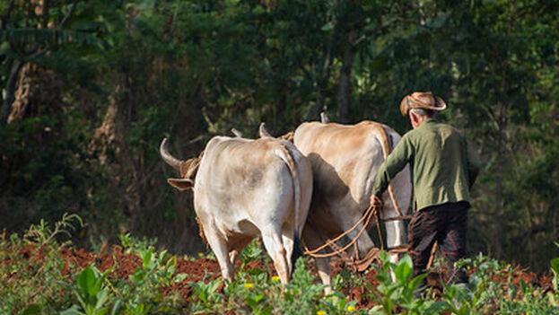 """Ahora, la poca cantidad de fertilizante que entra """"queda en manos de los funcionarios de la Asociación Nacional de Campesinos Pequeños"""". (Flikr/kuhnmi)"""