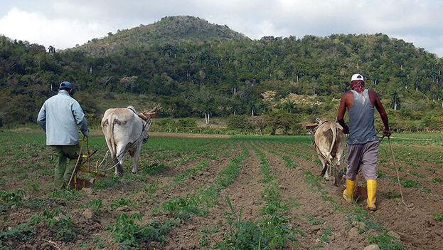 El Gobierno implementará 63 medidas en el sector agrícola. (Escambray)