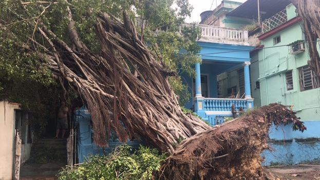 En La Habana han caído numerosos árboles debido a los fuertes vientos del huracán Irma. (14ymedio)