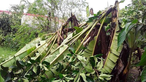 Ida castigó con lluvias y vientos a Pinar del Río. (Belkys Pérez Cruz/Facebook)