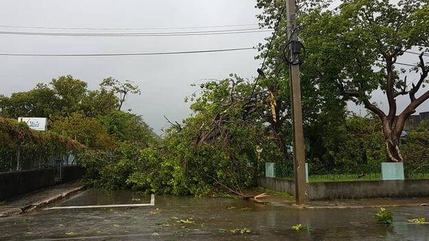 A su paso por Isla de la Juventud, Ida ocasionó el derribo de árboles que afectaron el cableado eléctrico y telefónico. (Islavision)
