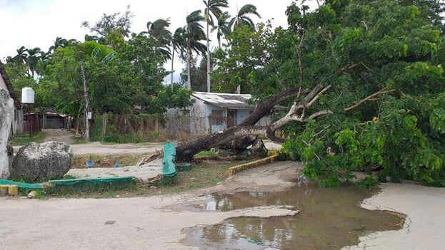 Durante la mañana, el centro de Laura ha transitado sobre los mares al sur de la región central de Cuba. Caibarién, municipio de Villa Clara, amaneció con algunos árboles derribados. (Pedry Roxana Rojo)