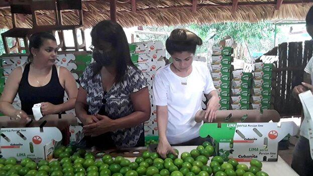 """Para Lázaro Rafael Fundora Hernández la nueva medida que le permite la exportación """"es un paso que debió haberse dado hace mucho tiempo"""". (Facebook)"""