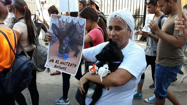 Milagro González, veterana de la causa contra el maltrato animal y protectora desde hace dos décadas. (14ymedio)