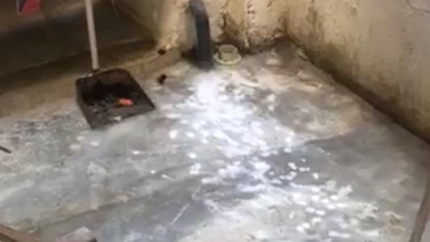 Los activistas del Movimiento San Isidro denunciaron que fueron atacados con una sustancia extraña y que cayó en la cisterna de agua. (Captura)