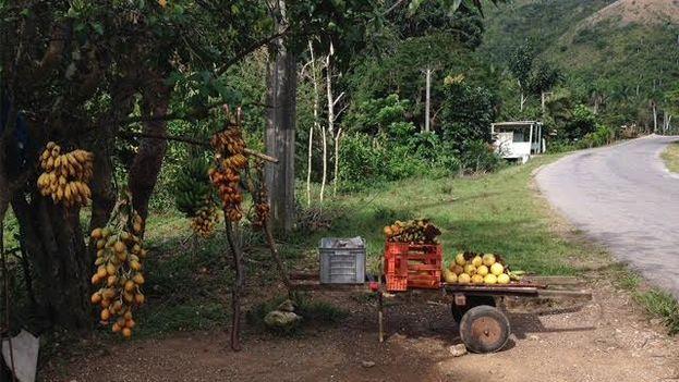 Oferta informal de productos agrícolas a un lado de la carretera en la provincia de Pinar del Río. (14ymedio)