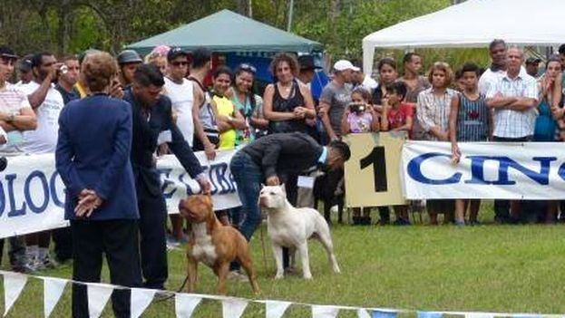 Perros. (Federación Cinológica de Cuba/Facebook)