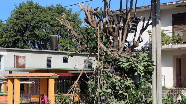 Poda de árboles en Santa Clara. (14ymedio)