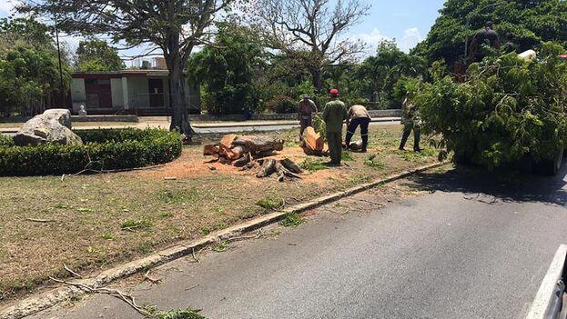 Tala de árboles en la Quinta Avenida de La Habana. (Facebook/María Cleofás Gómez)