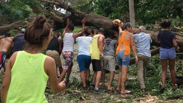 Vecinos de la barriada de La Timba, en La Habana, colaboran para levantar el tronco de un árbol derrumbado por el huracán Irma. (14ymedio)