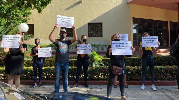 """Los activistas, que piden que se concrete la ley de bienestar animal, vestían de negro en señal de """"luto"""". (14ymedio)"""