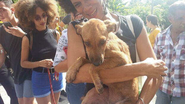 Uno de los animales rescatados tras la protesta de este lunes. (14ymedio)