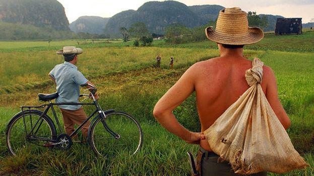 Los tributos se aplicarán según la extensión y las características de los terrenos destinados a la agricultura. (miscelaneasdecuba.net)