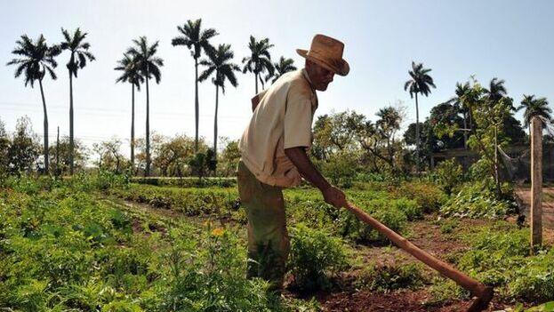 En los últimos meses las autoridades nacionales han llamado repetidamente a aumentar la producción agrícola. (EFE)