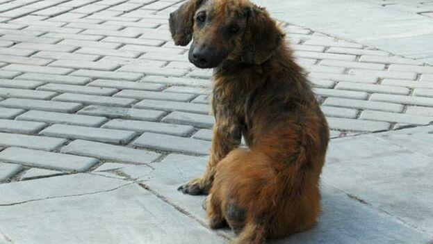 Las autoridades cubanas alistan un proyecto de ley para la protección de los animales. (Barry)