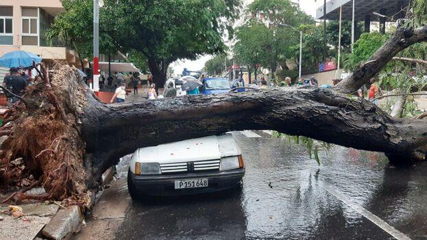 Un auto de color blanco fue dañado por la caída de un árbol en la calle 23 y N, en la barriada de El Vedado. (14ymedio)