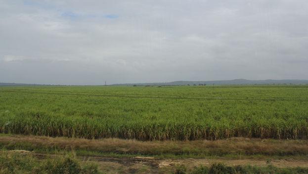 Un campo de caña de azúcar en Cuba. (Flickr/CC)