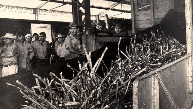 Pero a mediados de marzo de 1970 se llegó a un punto de no retorno en el que la cantidad de caña que quedaba por cortar no lograría convertirse en las toneladas de azúcar. (Archivo)