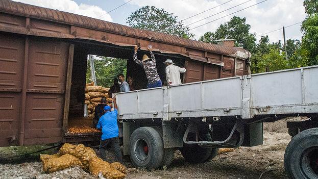 El cargamento de papas en los vagones afectados fue trasladado por carretera. (periodico26.cu)
